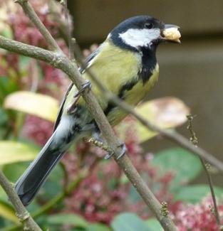 birding_a